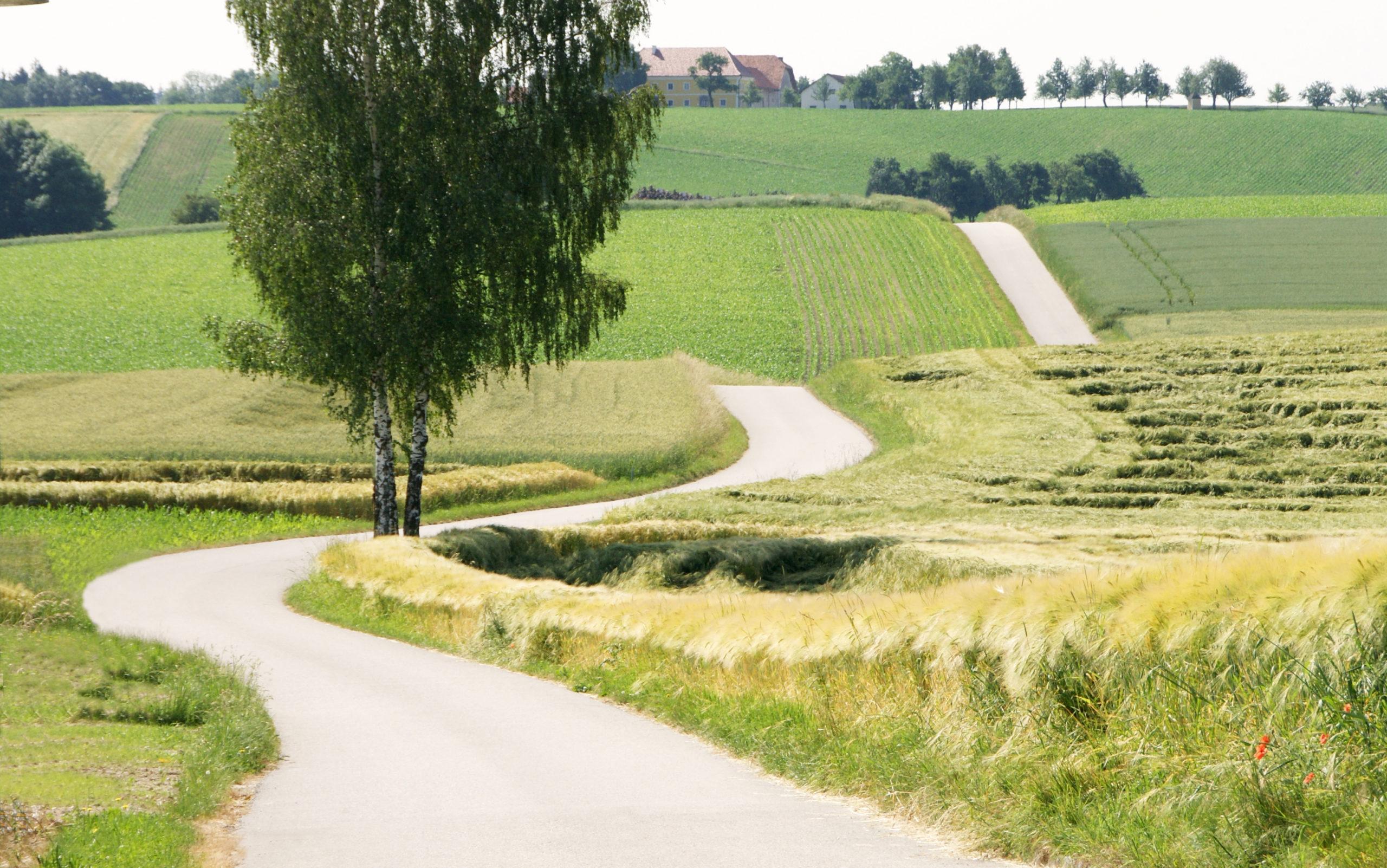 Online-Emmaus-Weg in unserer Pfarrei 12